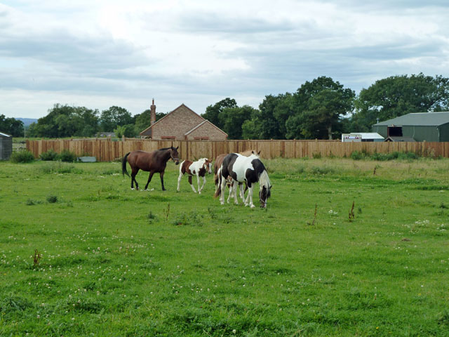 Horses on Oakwood Farm