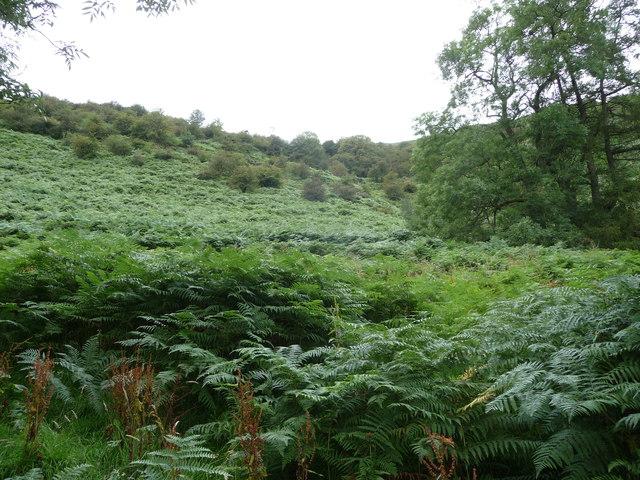 Bracken clad hillside in the Vale of Ewyas