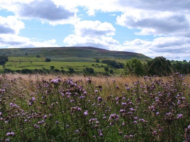 Coverdale landscape