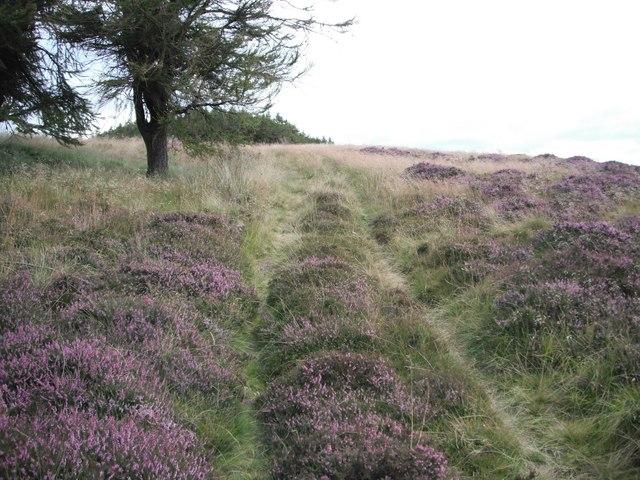 Path going NE from Kilpurney Hill