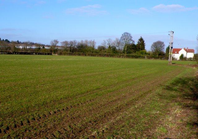 Fields at Little Luddington.