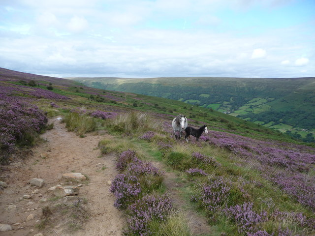 Mother and foal above the Vale of Ewyas in the Black Mountains