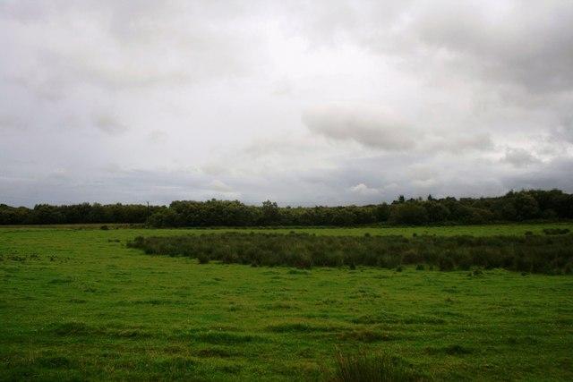 Craibadona Moss
