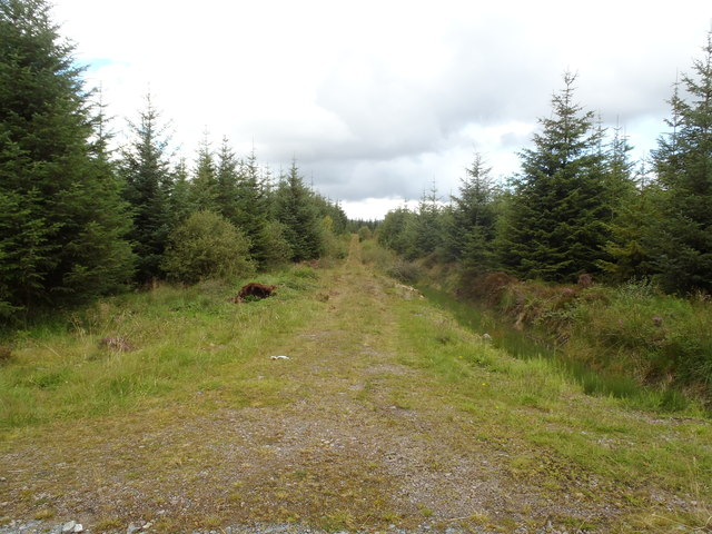 Overgrown forest track within Clatteringshaws Forest