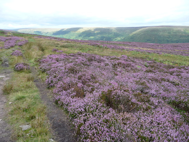Heather moor in the Black Mountains