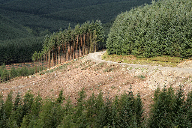 Forestry at Whitecleuch Fell