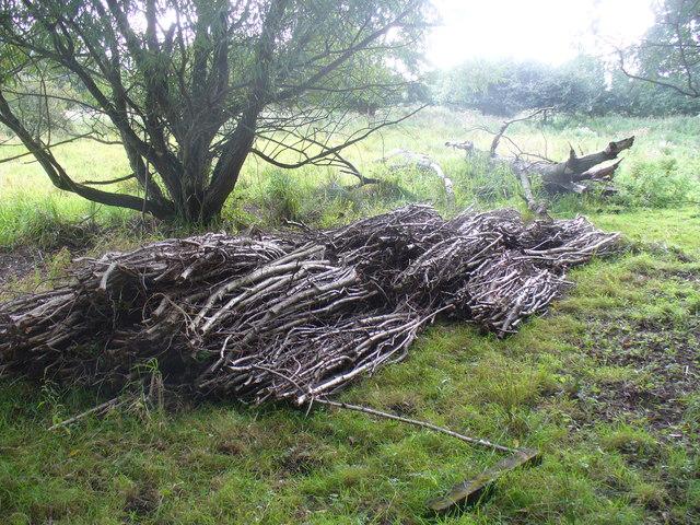 Wood Cuttings by Stoke Lock