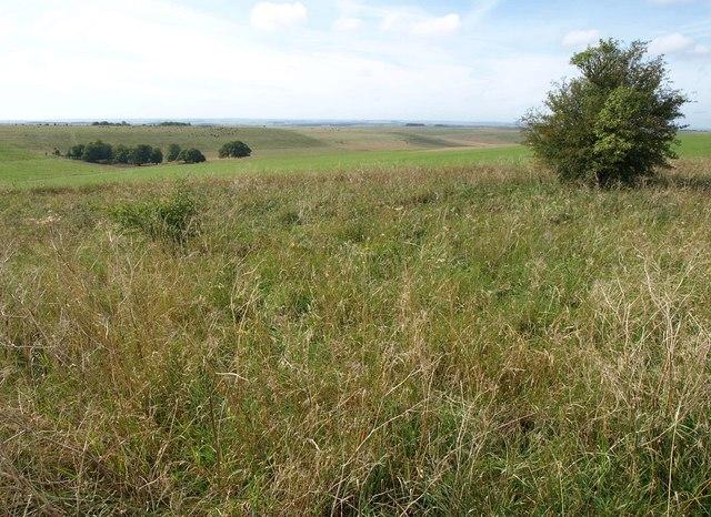 Downland near Urchfont Hill