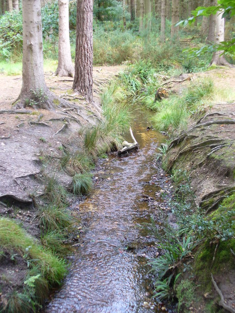 Stream in Queen's Wood