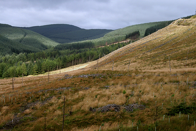 An old clear fell area at Clagberry Sike