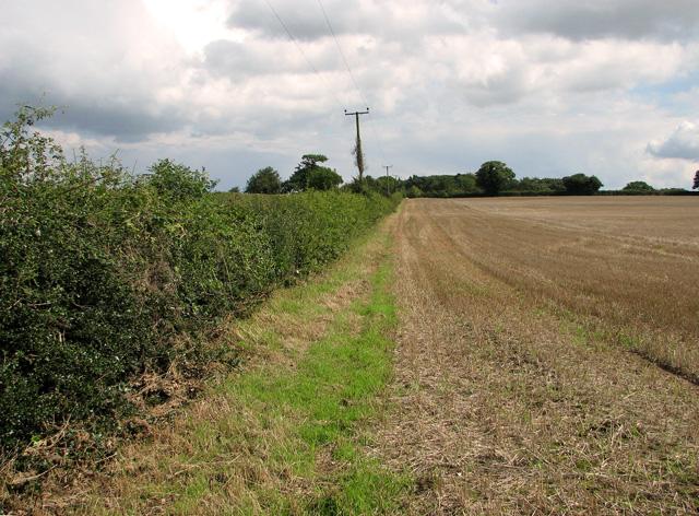 Field boundary north of Mill Lane, Briningham