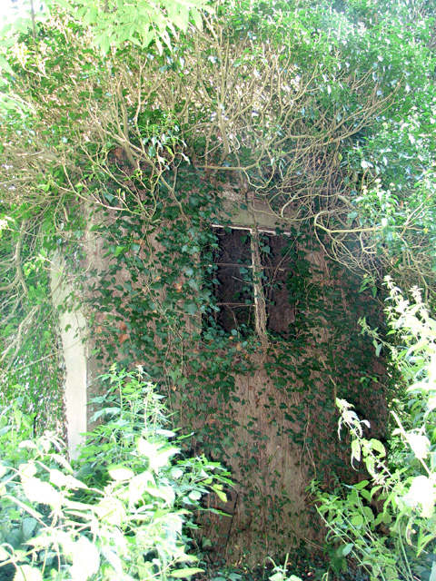 Ivy-clad building on the edge of Oulton Belt