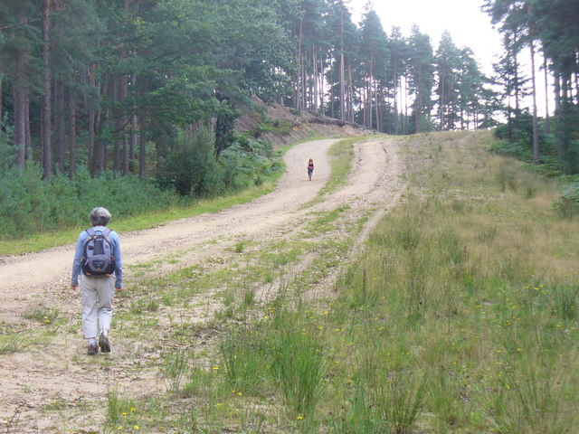 Ascending Surrey Hill