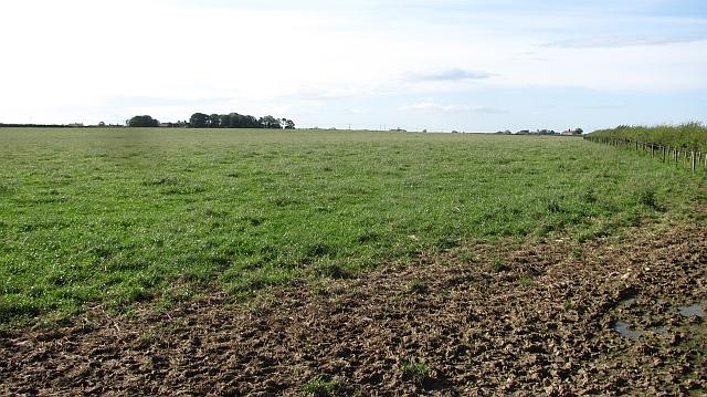 Grass near Brunton Bridge