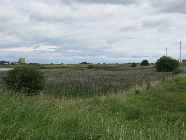 Reedbed at Teesmouth