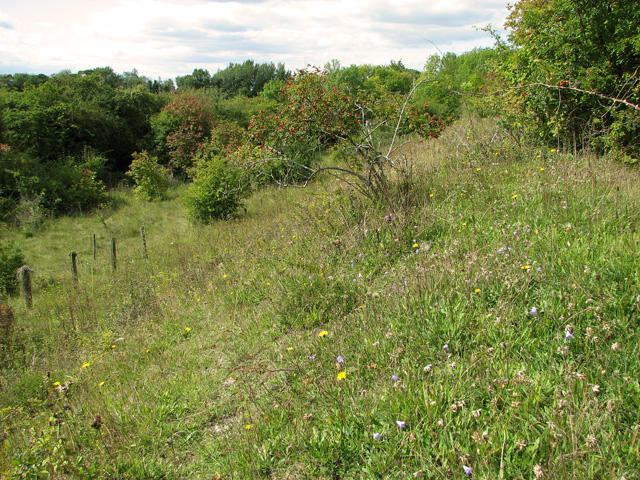 Railway Line Nature Reserve, Narborough
