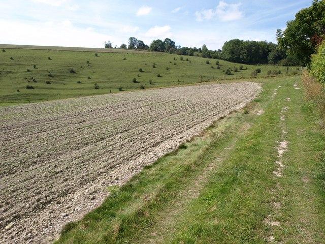 Bridleway by Redhorn Plantation