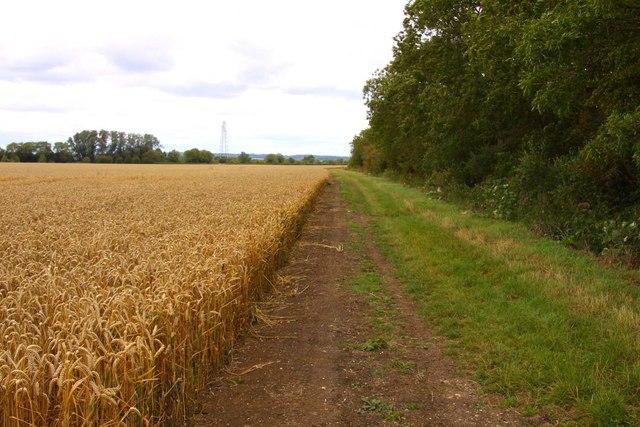 Bridleway to Marcham