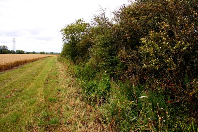 Hedgerow by the bridleway