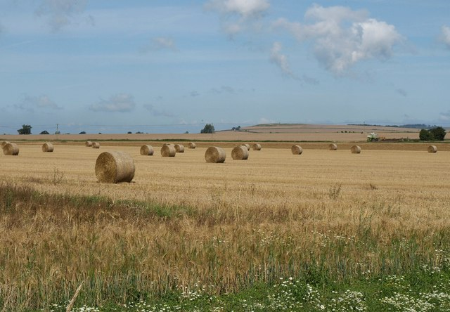 Bales near Conock