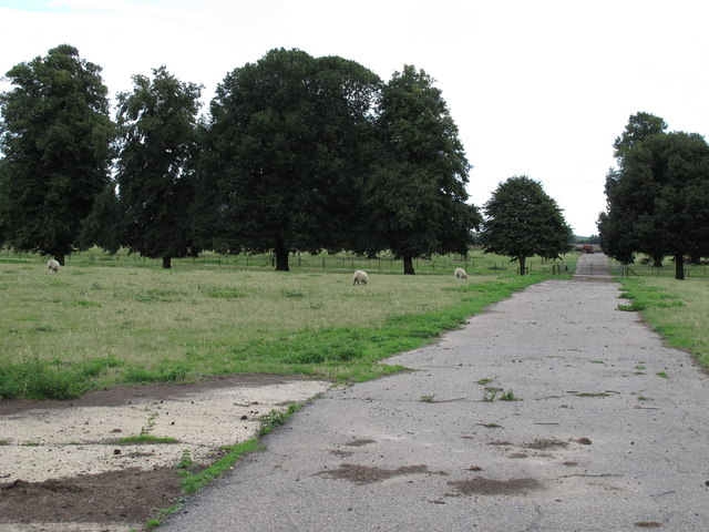 Sheep in Woolverstone Park
