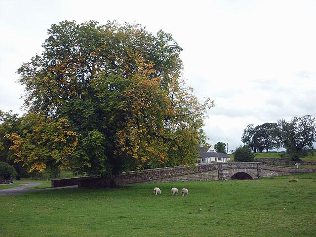 Bridge and chestnut tree, Maulds Meaburn