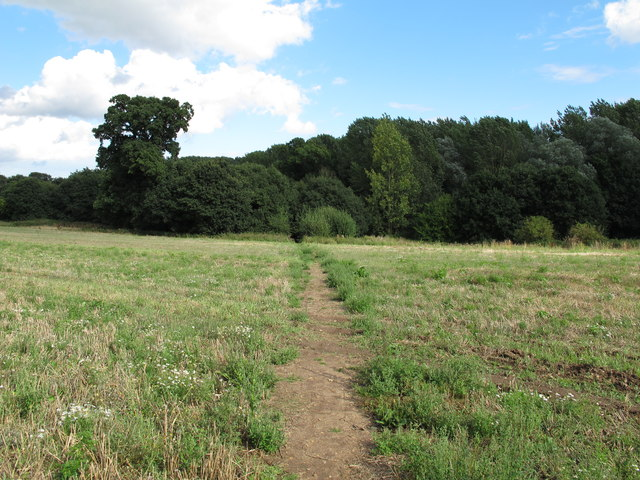 Looking back to the woods, Woolverstone Park