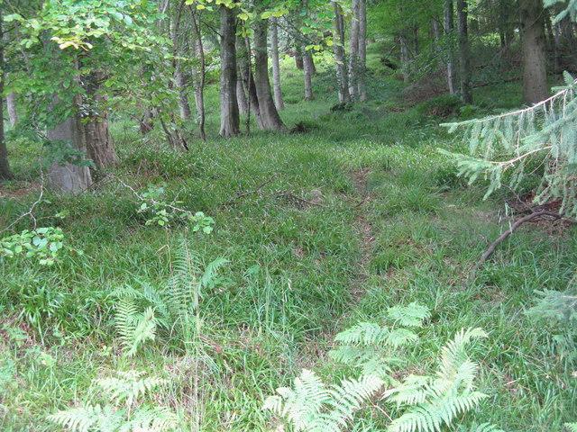 Deer path in Pressmennan Wood