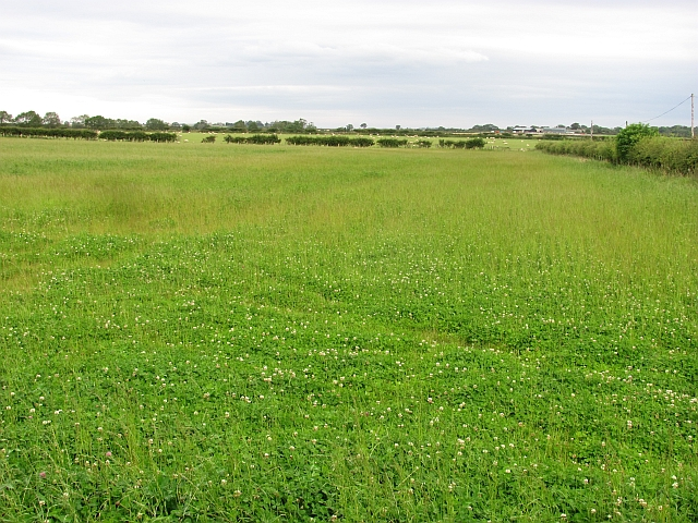 Field, Newham Hall