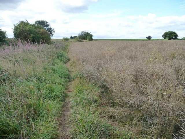 Path along the edge of an oil seed rape field