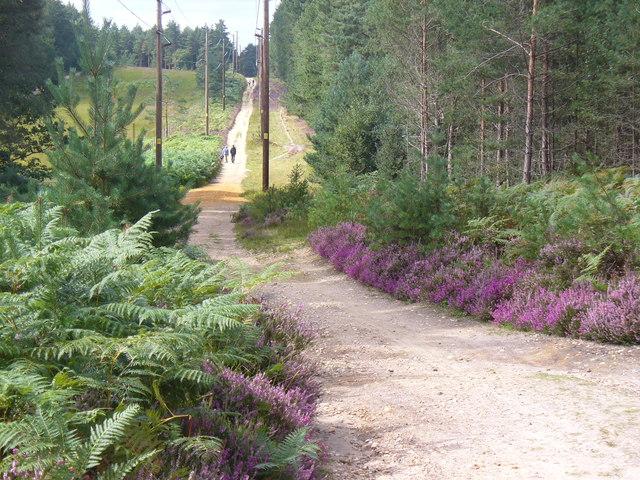 Path from Wishmoor Cross