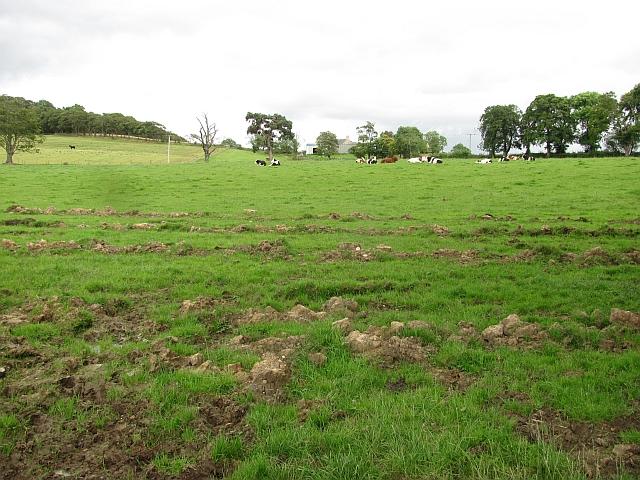 Field, Wester Woodside