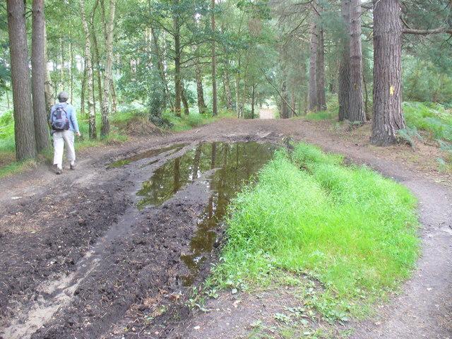 Descent to Wishmoor Bottom