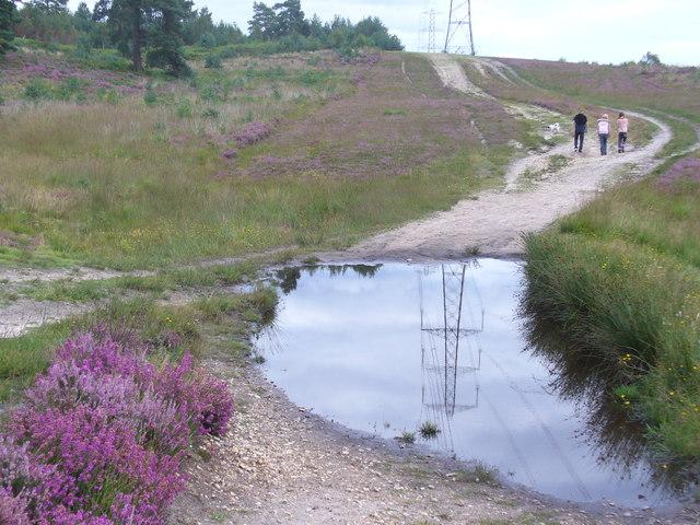 Track on Olddean Common