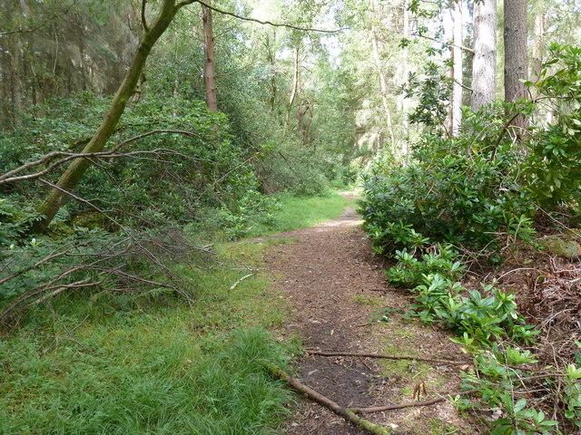 Footpath 3619 in the Warren