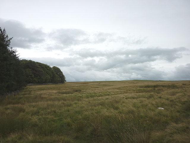 The edge of Maskriggs Wood