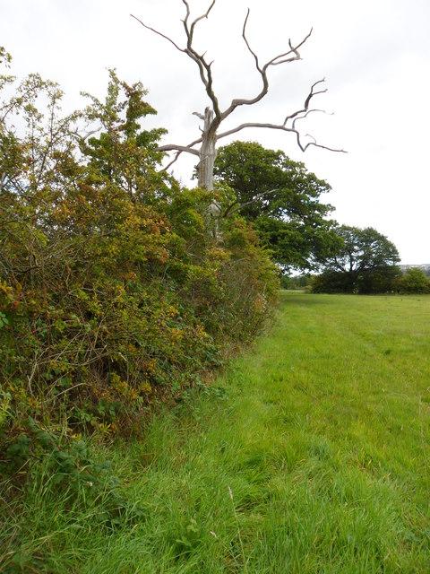 Autumn hedgerow near Molly Carr Wood