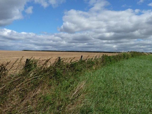 Boundary between grass and stubble