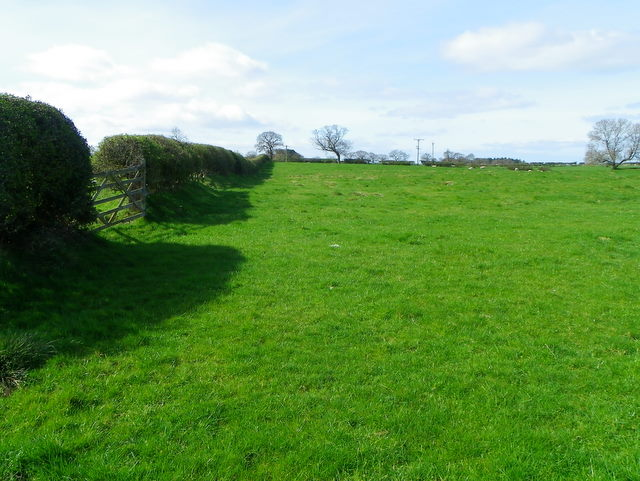 Hedge and pasture near Morpeth