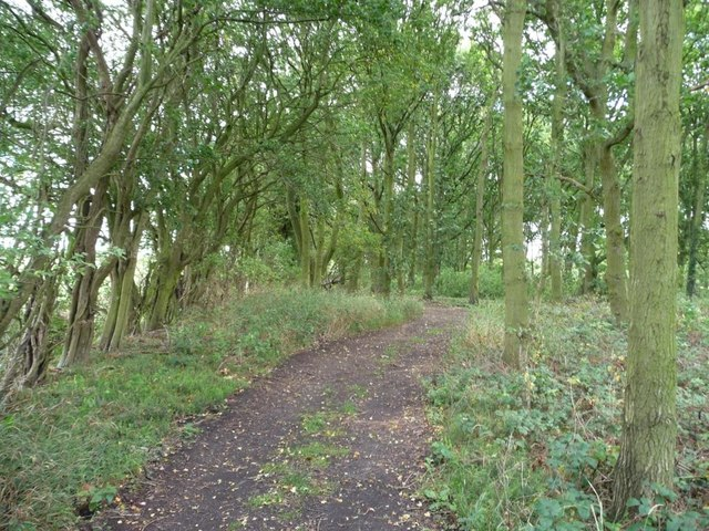 Woodland on the northern edge of Garforth golf course