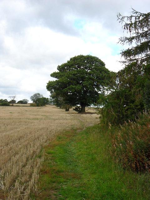 Oak Tree, Farnley Hey.