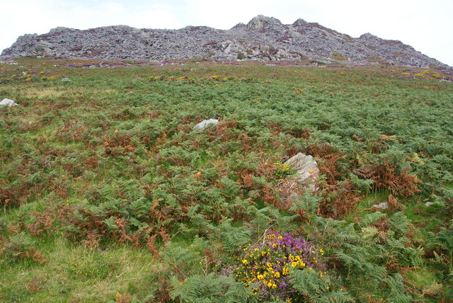 Hillside below Carn Ingli