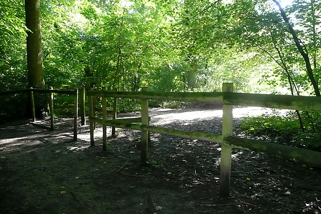 Path in Blackhouse Wood