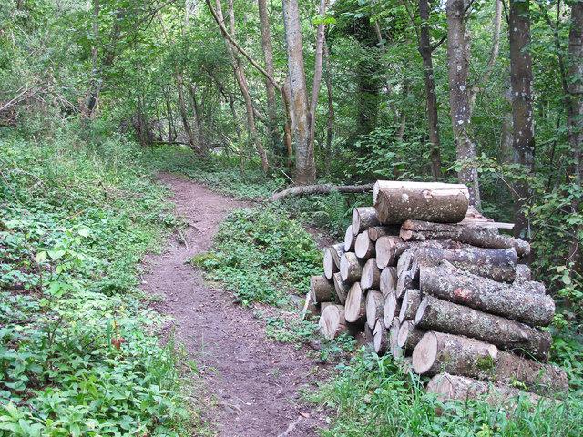 Path in Dunning Glen