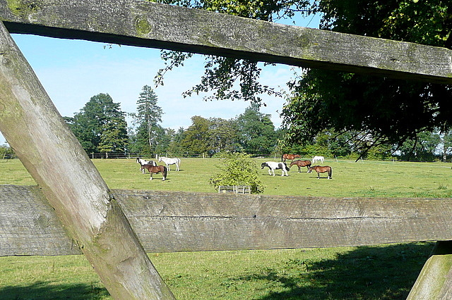 Rosehill riding stables