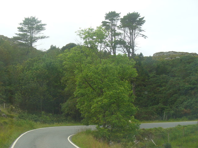 Woodland South of Crannag