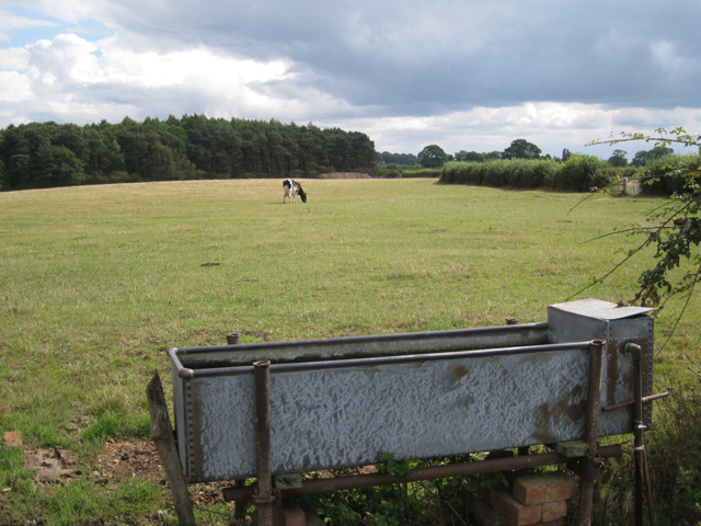 Pasture at Marsh Farm