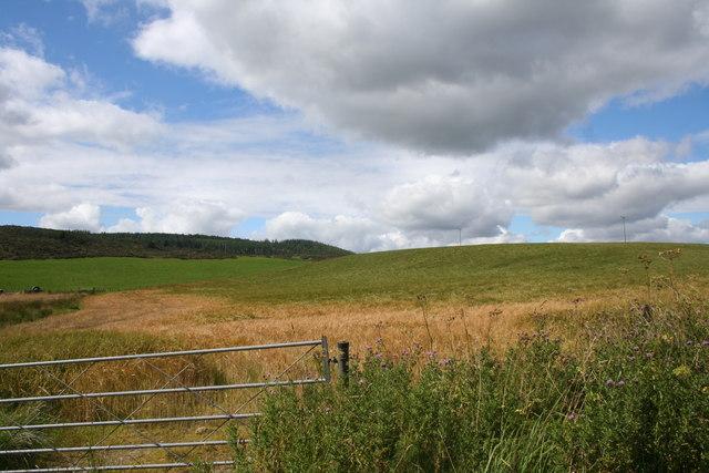 Ripening Field