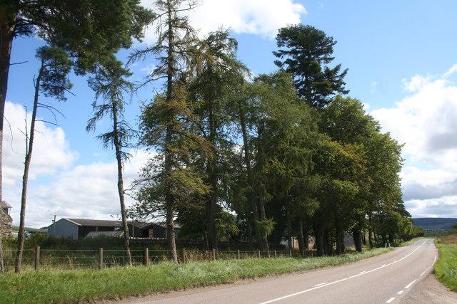Midtown of Buchromb