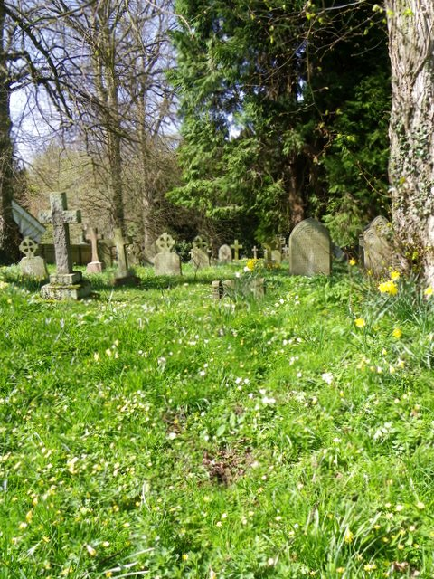 Primroses in the churchyard, Longhirst